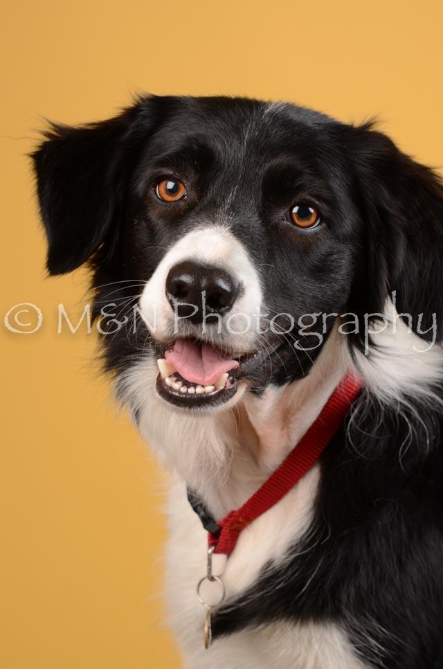 M&N Photography -DSC_4503