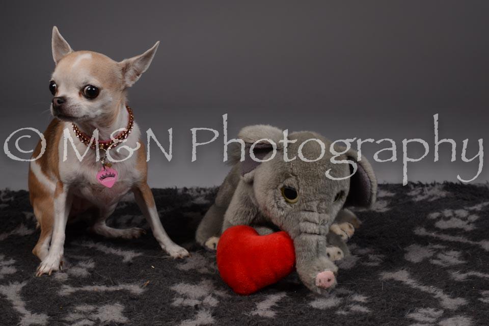 M&N Photography -DSC_2191