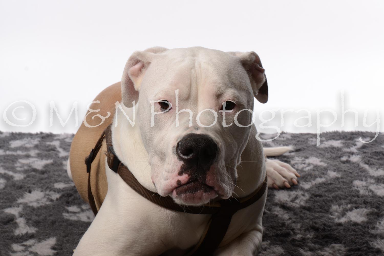 M&N Photography -DSC_8777
