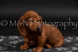M&N Photography -DSC_2520