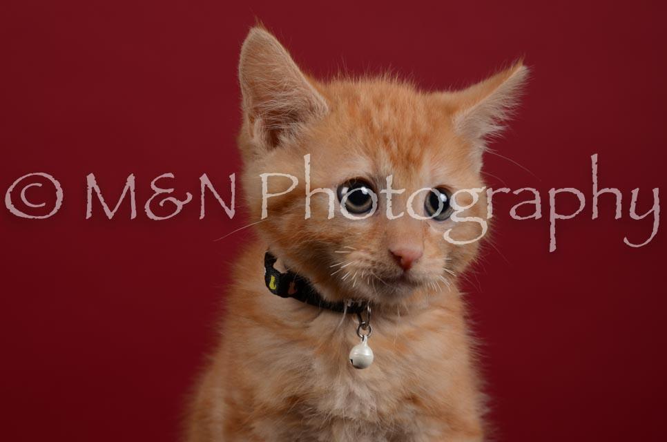 M&N Photography -DSC_3014