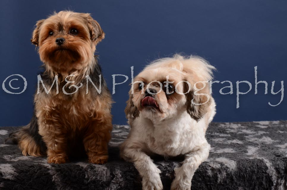 M&N Photography -DSC_4011