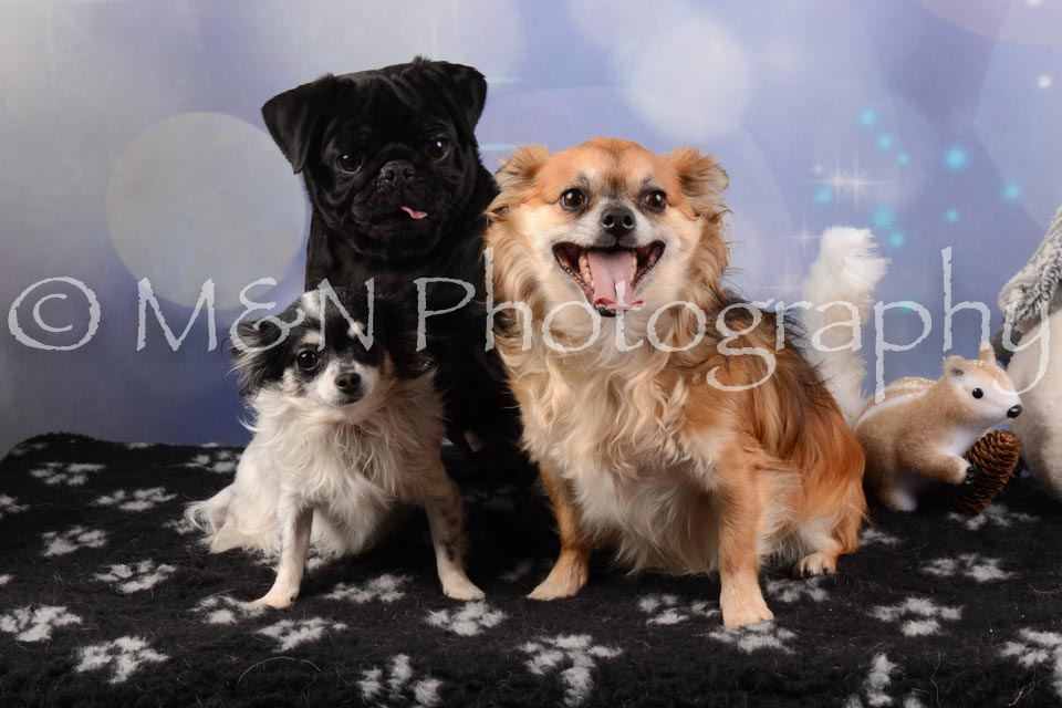 M&N Photography -DSC_6627