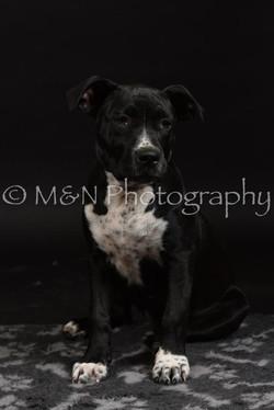 M&N Photography -DSC_2660