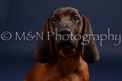 M&N Photography -DSC_0252
