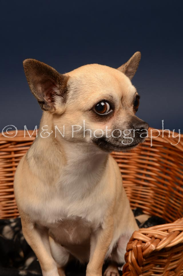 M&N Photography -DSC_4571