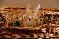 M&N Photography -_SNB0955