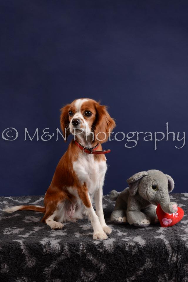 M&N Photography -DSC_4043