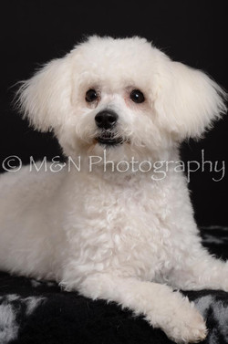 M&N Photography -DSC_5610