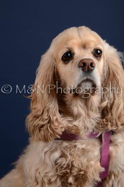 M&N Photography -DSC_4015