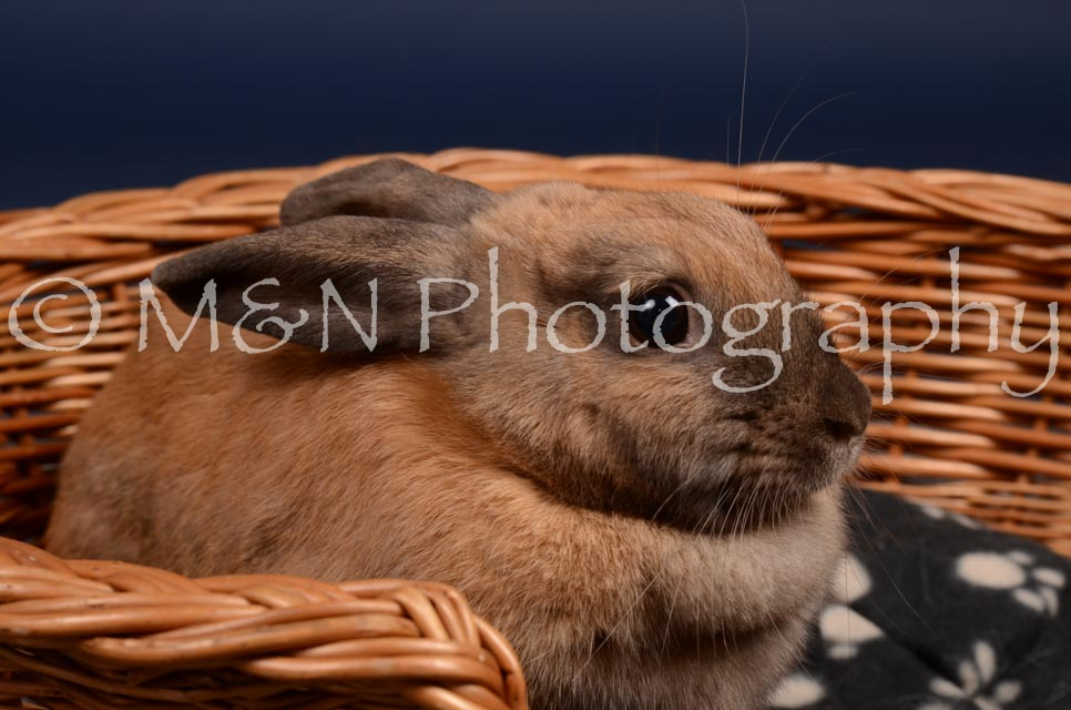 M&N Photography -DSC_0768