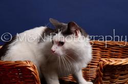 M&N Photography -IMG_4478