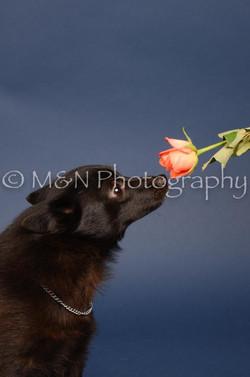 M&N Photography -DSC_3919