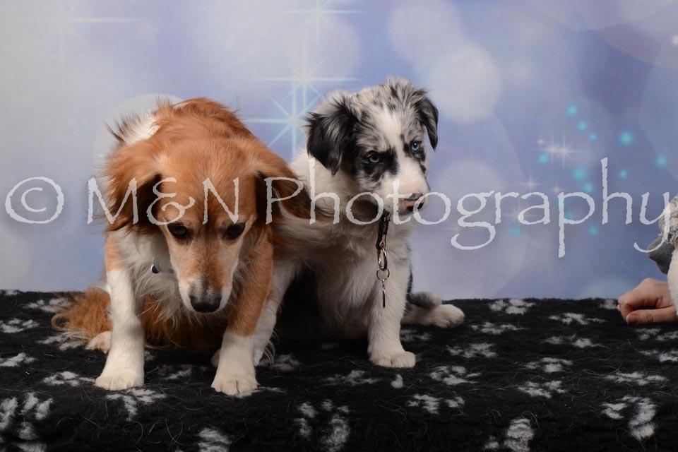 M&N Photography -DSC_6910