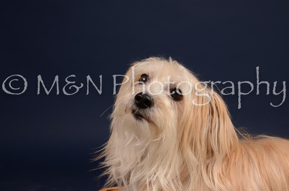 M&N Photography -DSC_0819