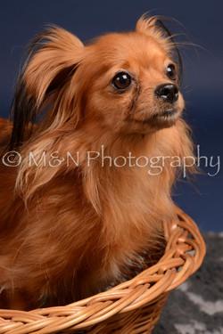 M&N Photography -DSC_0276