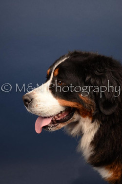 M&N Photography -DSC_3808