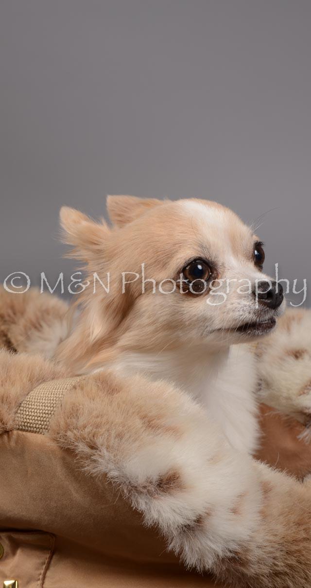 M&N Photography -DSC_1647-2