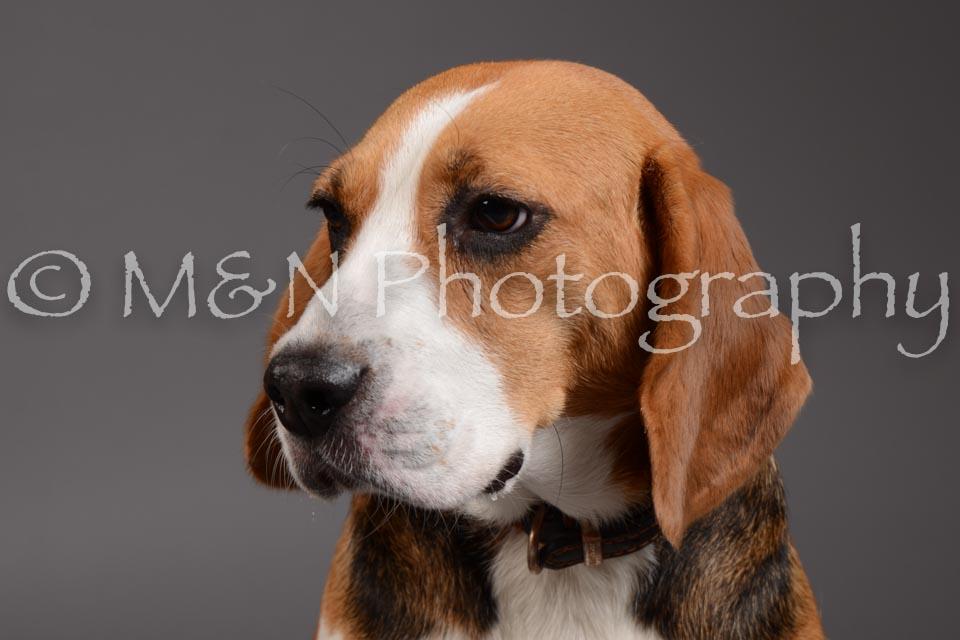 M&N Photography -DSC_2356