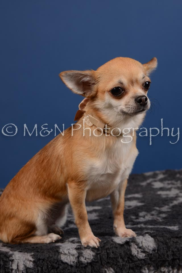 M&N Photography -DSC_5293