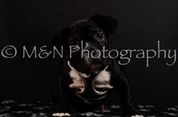 M&N Photography -DSC_5950