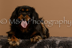 M&N Photography -_SNB0675