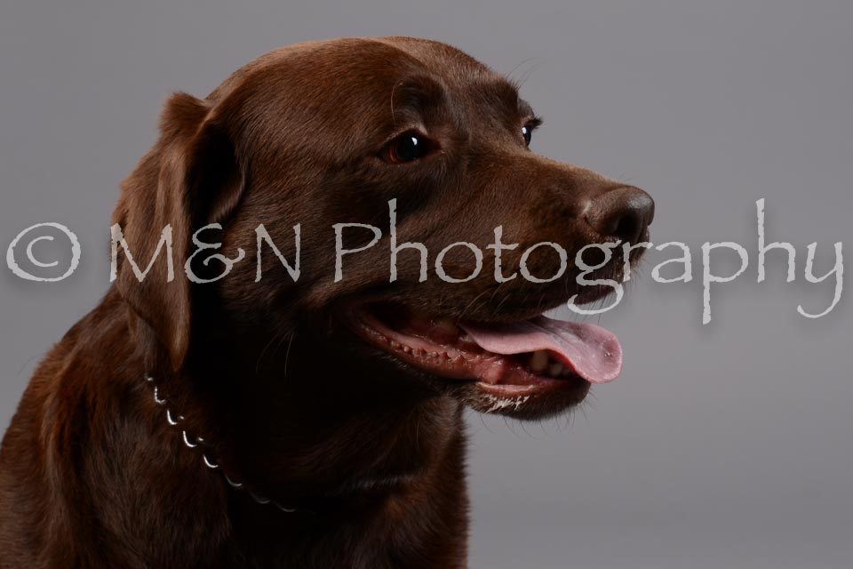 M&N Photography -DSC_2528
