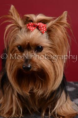 M&N Photography -DSC_3619