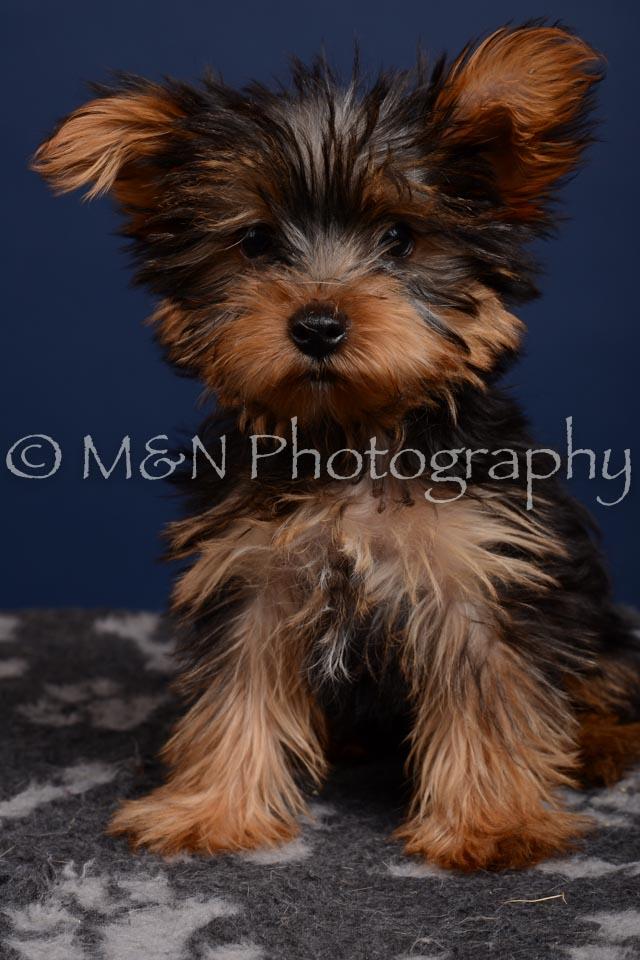 M&N Photography -DSC_4350