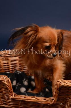 M&N Photography -DSC_0263
