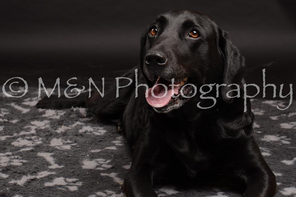 M&N Photography -DSC_0032