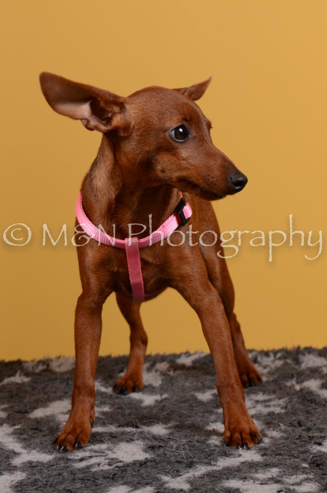 M&N Photography -DSC_4599