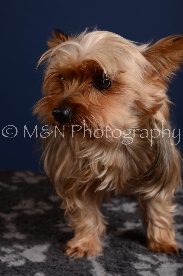 M&N Photography -DSC_4111