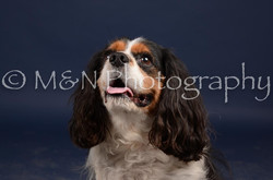 M&N Photography -DSC_0751