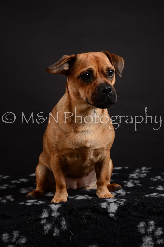 M&N Photography -DSC_5459