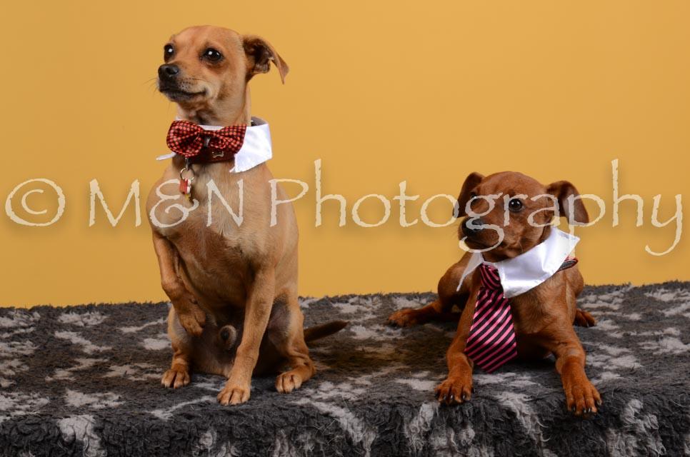 M&N Photography -DSC_4641
