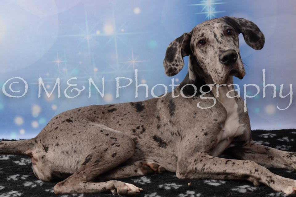 M&N Photography -DSC_6837