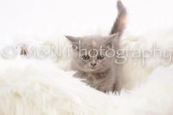 M&N Photography -DSC_8840