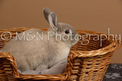 M&N Photography -_SNB0500