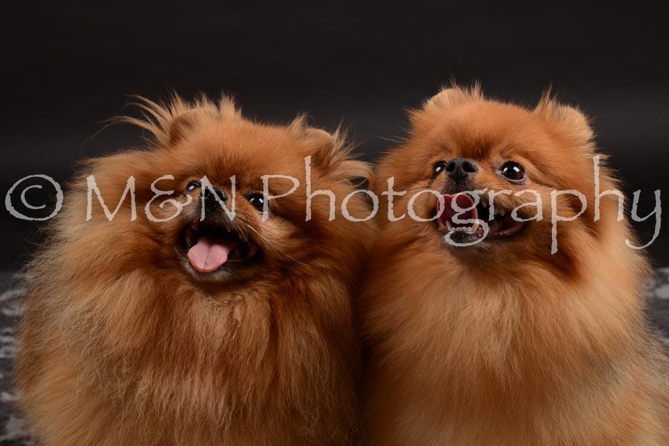 M&N Photography -DSC_0171