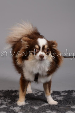 M&N Photography -DSC_2476