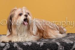M&N Photography -DSC_4545