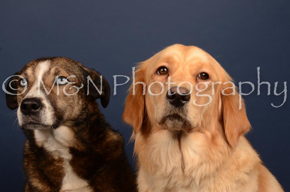 M&N Photography -DSC_4698