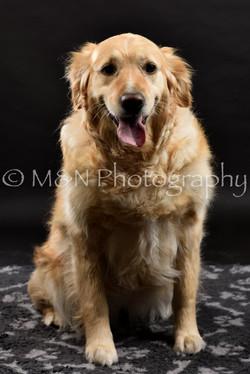 M&N Photography -DSC_2437