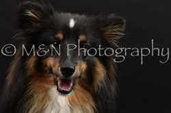 M&N Photography -DSC_2563