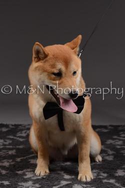 M&N Photography -DSC_2157