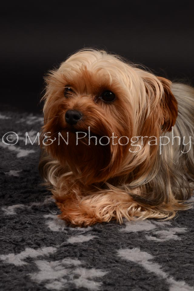 M&N Photography -DSC_9709