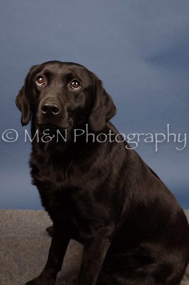 M&N Photography -DSC_4338