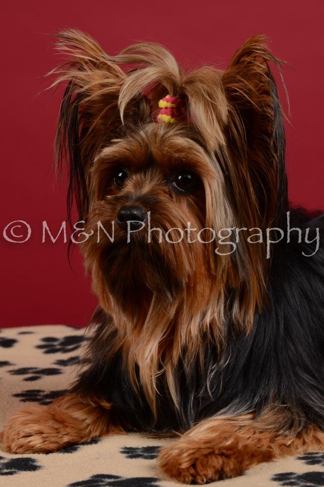 M&N Photography -DSC_3560
