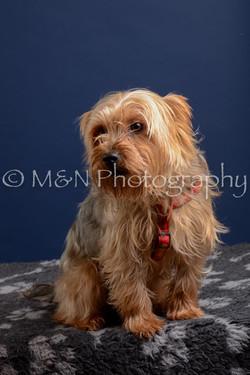 M&N Photography -DSC_3879